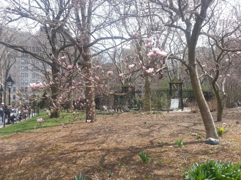 NYU旁邊的Washington Square,今年天氣變化不定,看不到櫻花盛開‧‧