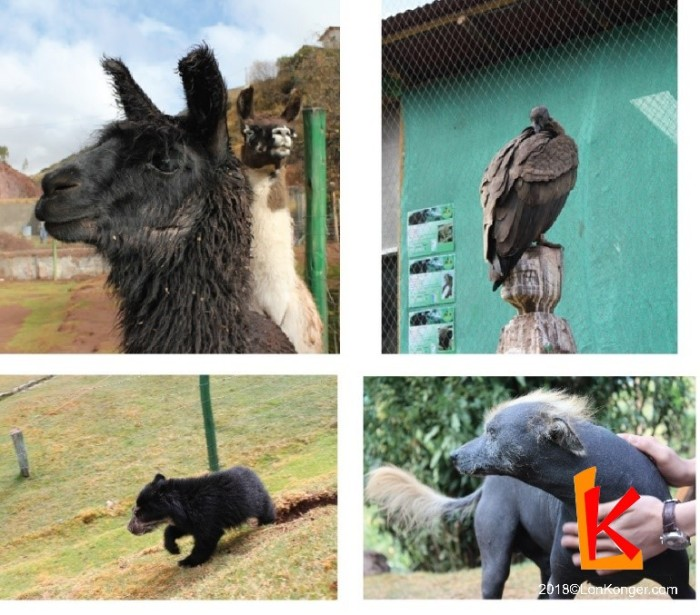 Ccochahuasi Animal Sanctuary